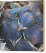 Baby Bluebirds Wood Print