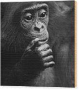 Baby Bonobo Wood Print