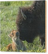 Baby Buffalo And Mother Wood Print