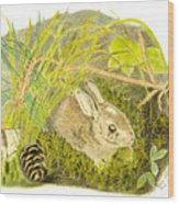 Baby Bunny Down For The Night Wood Print