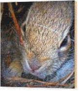 Baby Bunny Wood Print