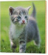 Baby Cat Wood Print
