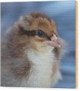 Baby Chicken Wood Print by Angie Wingerd