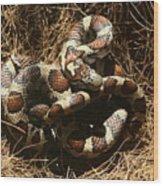 Baby Corn Snake Wood Print