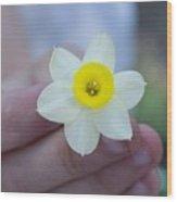 Baby Daffodil Wood Print