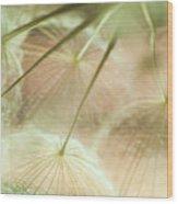 Baby Dandelion Wood Print