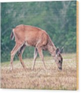 Baby Deer Walking On Grass By Forest Wood Print