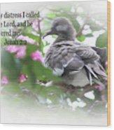Baby Dove Jonah 2 V 2 Wood Print