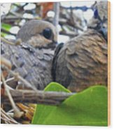 Baby Doves 2 Wood Print