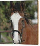 Baby Draft Horse Wood Print