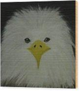 Baby Eagle Wood Print
