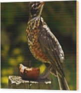Infant American Robin Wood Print