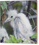 Baby Egret Wood Print