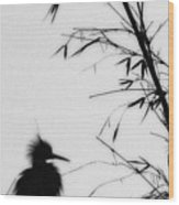 Baby Egret Waits Wood Print