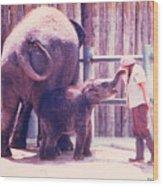 Baby Elephant At Zoo 1988 Wood Print