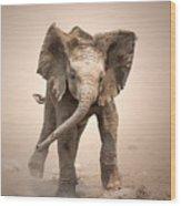 Baby Elephant Mock Charging Wood Print