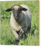 Baby Ewe Wood Print