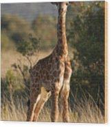 Baby Giraffe Wood Print