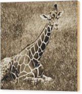 Baby Giraffe In Grasses Wood Print