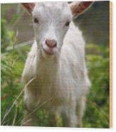 Baby Goat Wood Print