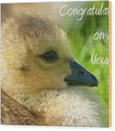 Baby Goose Card Wood Print