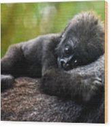 Baby Gorilla Wood Print