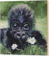 Baby Gorilla With Daisies Wood Print