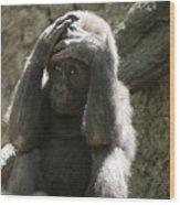 Baby Gorilla1 Wood Print