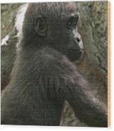 Baby Gorilla2 Wood Print
