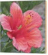 Baby Grasshopper On Hibiscus Flower Wood Print