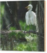 Baby Great Egrets With Nest Wood Print