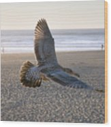 Baby Gull At Dusk Wood Print