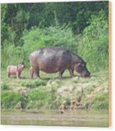 Baby Hippo 1 Wood Print