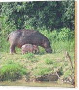 Baby Hippo 2 Wood Print