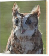 Cute Screetch Owl Wood Print