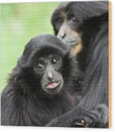 Baby Monkey And Mother Wood Print