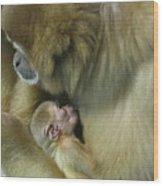 Baby Monkey Wood Print
