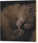 Baby Of Mine Wood Print