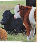 Baby Of The Herd Wood Print