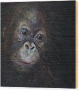 Baby Orangutan Three Wood Print