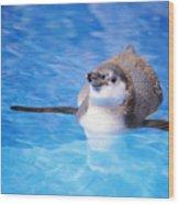 Baby Penguin Floating Wood Print