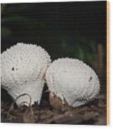 Baby Puffballs Wood Print