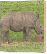 Baby Rhino Chilling Wood Print