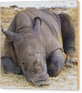 Baby Rhino Resting Wood Print