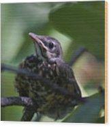 Baby Robin Wood Print