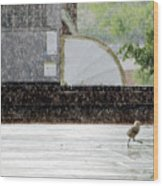 Baby Seagull Running In The Rain Wood Print