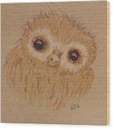 Baby Sloth Wood Print