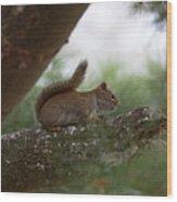 Baby Squirrel Wood Print