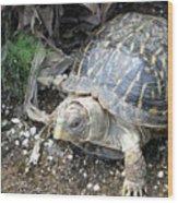 Baby Tortoise Wood Print