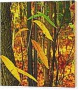 Baby Tree Foliage Wood Print